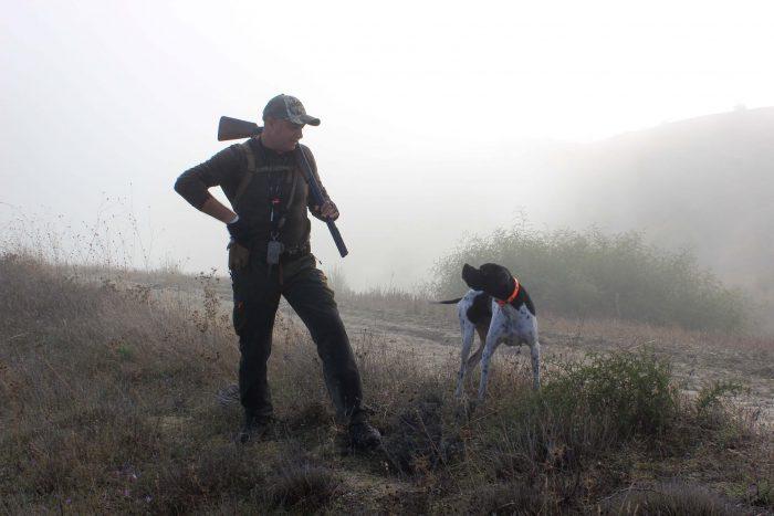 polowanie na dziki z psem co trzeba wiedzieć
